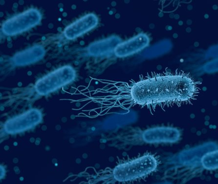Mathematical approach to predicting bacterial growth offers fresh AMR insights