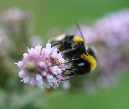 Pesticides found to affect bees' genes