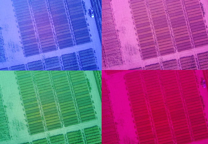 Four different-coloured images of the same field