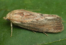 How can moths help us to develop better tuberculosis treatments?