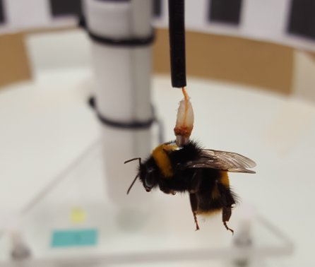 Pesticide exposure causes bumblebee flight to fall short