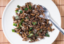 Eating insects makes sense. So why don't we?
