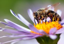 Protecting pollinators and funding future leaders: News from the College