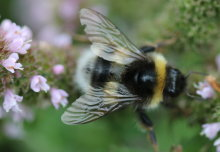 World Bee Day: the buzz around Imperial's research