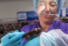 Imperial named Leader in Openness on animal research