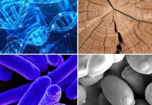 Synthetic biology roadmap could set research agenda for next 10 years