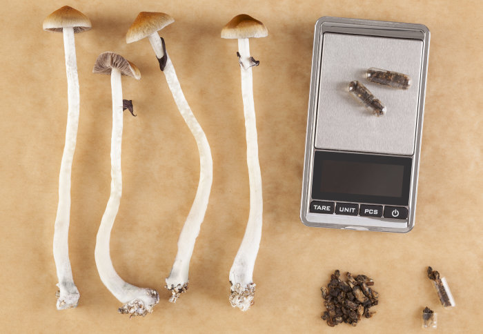 Dried magic mushrooms with scales and capsules of psilocybin