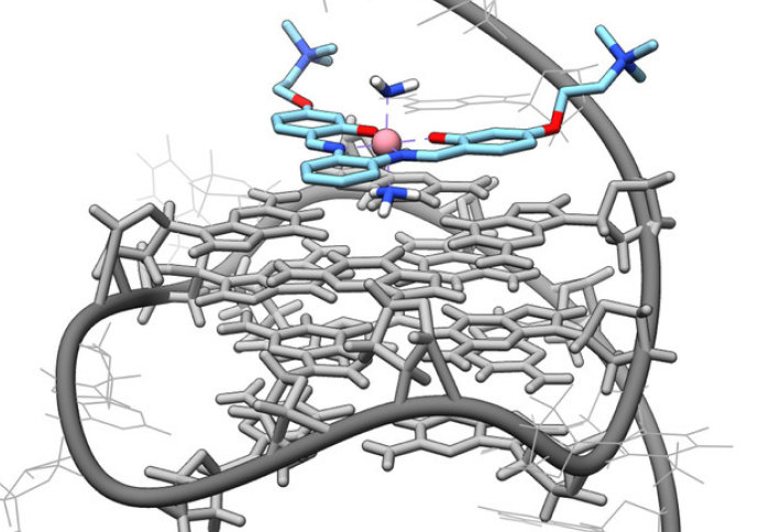 An model of the interactions between the cobalt-salphen molecule and G4-DNA generated by molecular docking