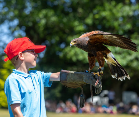 Bugs! Day expands to include Birds and Beasts with roaring success