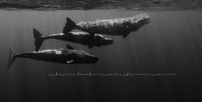 Sperm whales swimming in sea