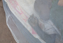 Mosquito net distribution could halve Malaria deaths in Africa during COVID-19