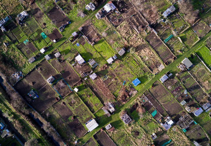 Aerial view of allotment plots