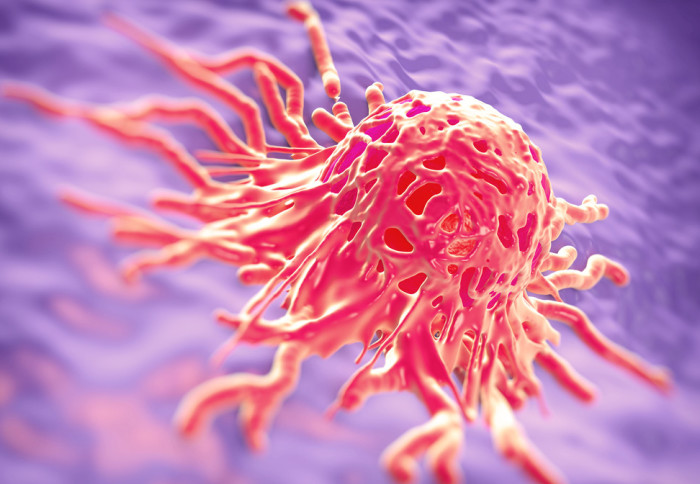 Cervical cancer cell