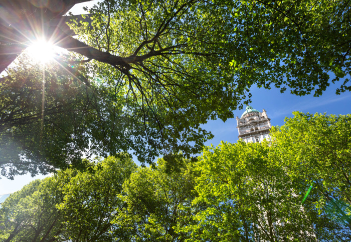 Queen's Tower between trees Clean Air Day 2021
