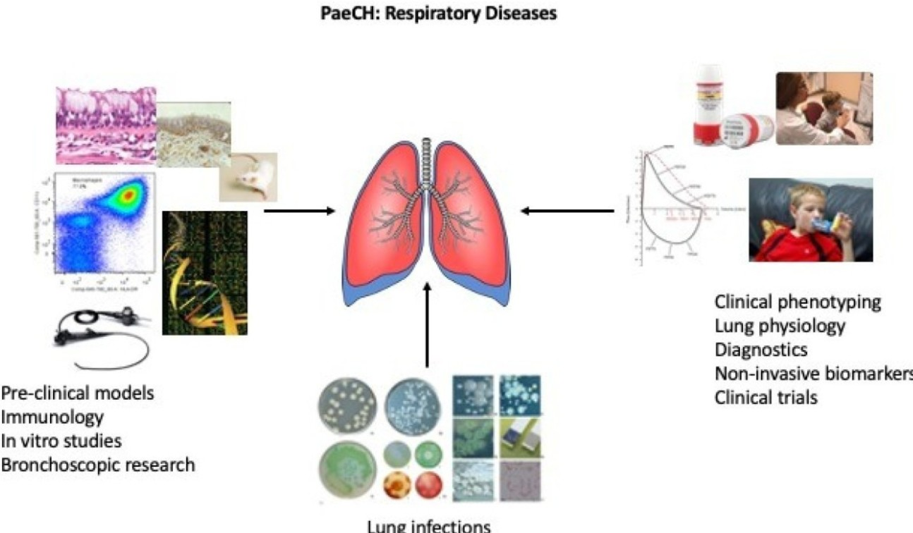 A diagram showing the areas of research covered by the Respiratory Diseases theme