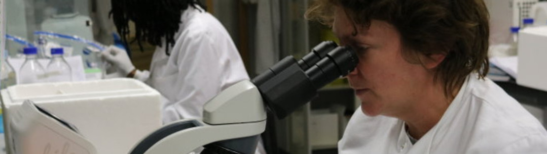 A researcher using a microscope in the lab