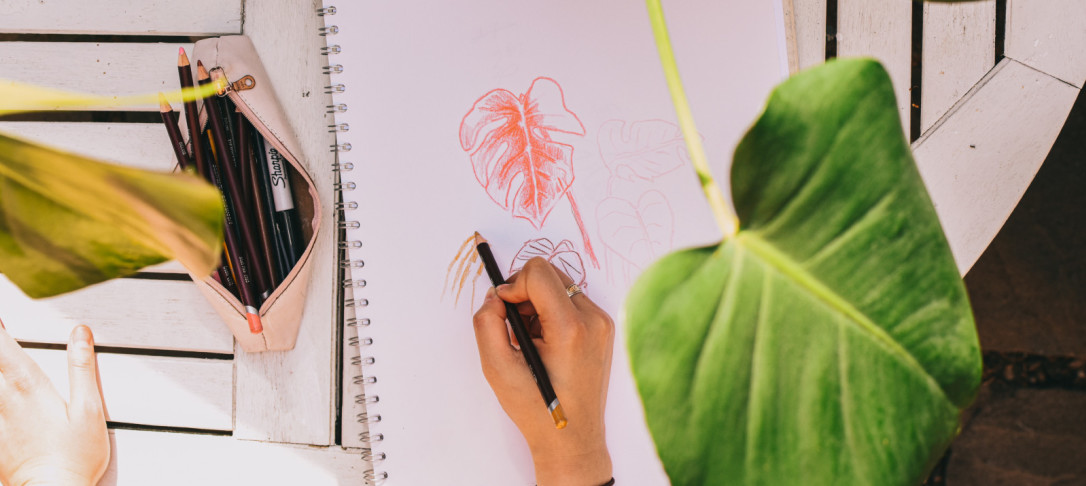 sketch of plant's leaves
