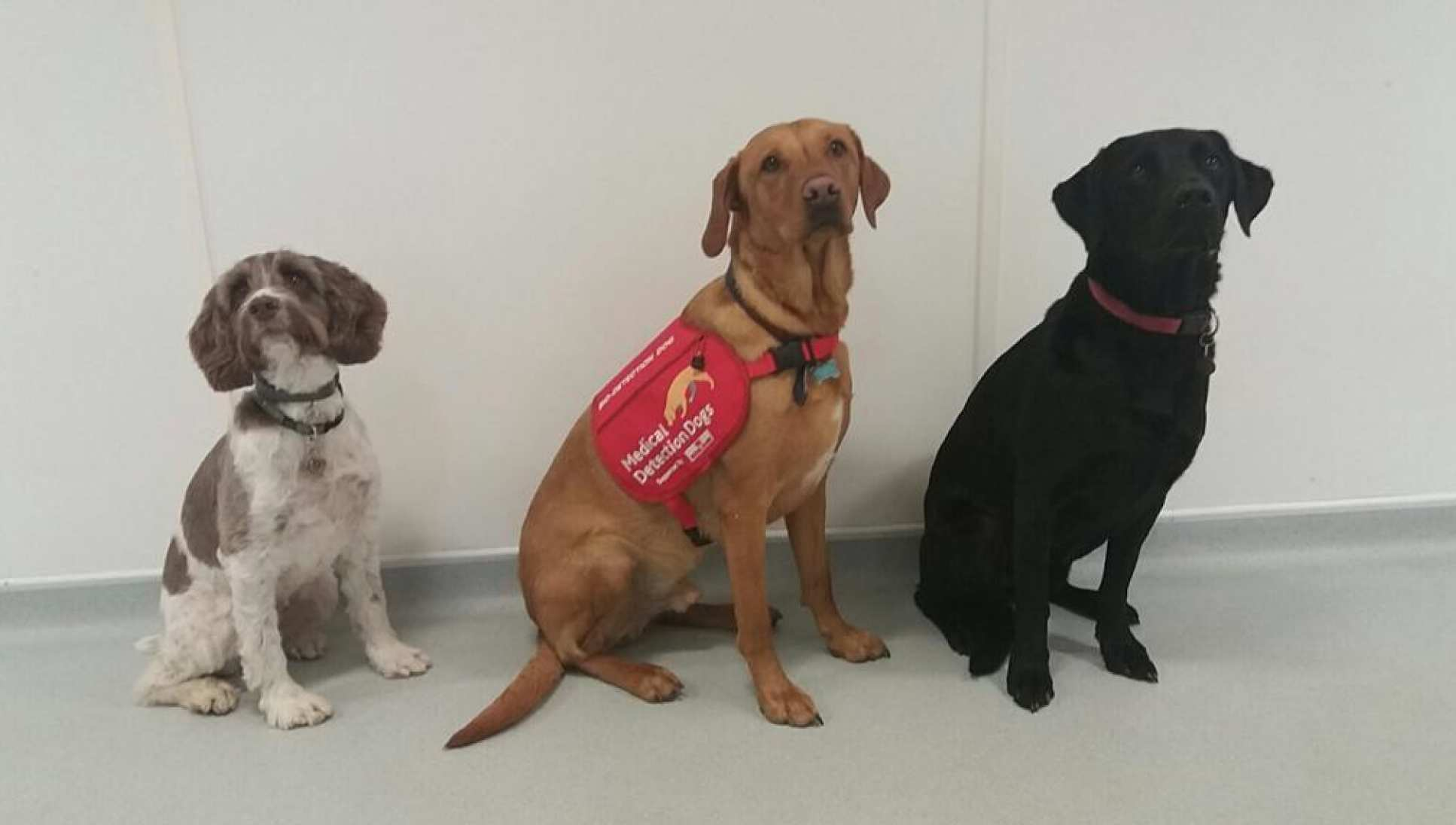 Three of the medical detection dogs