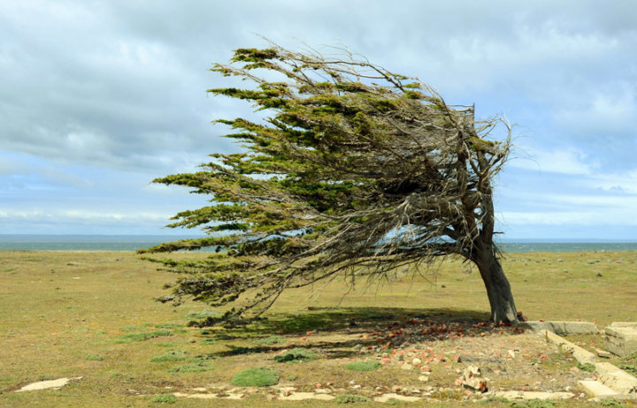 Tree standing in the wind