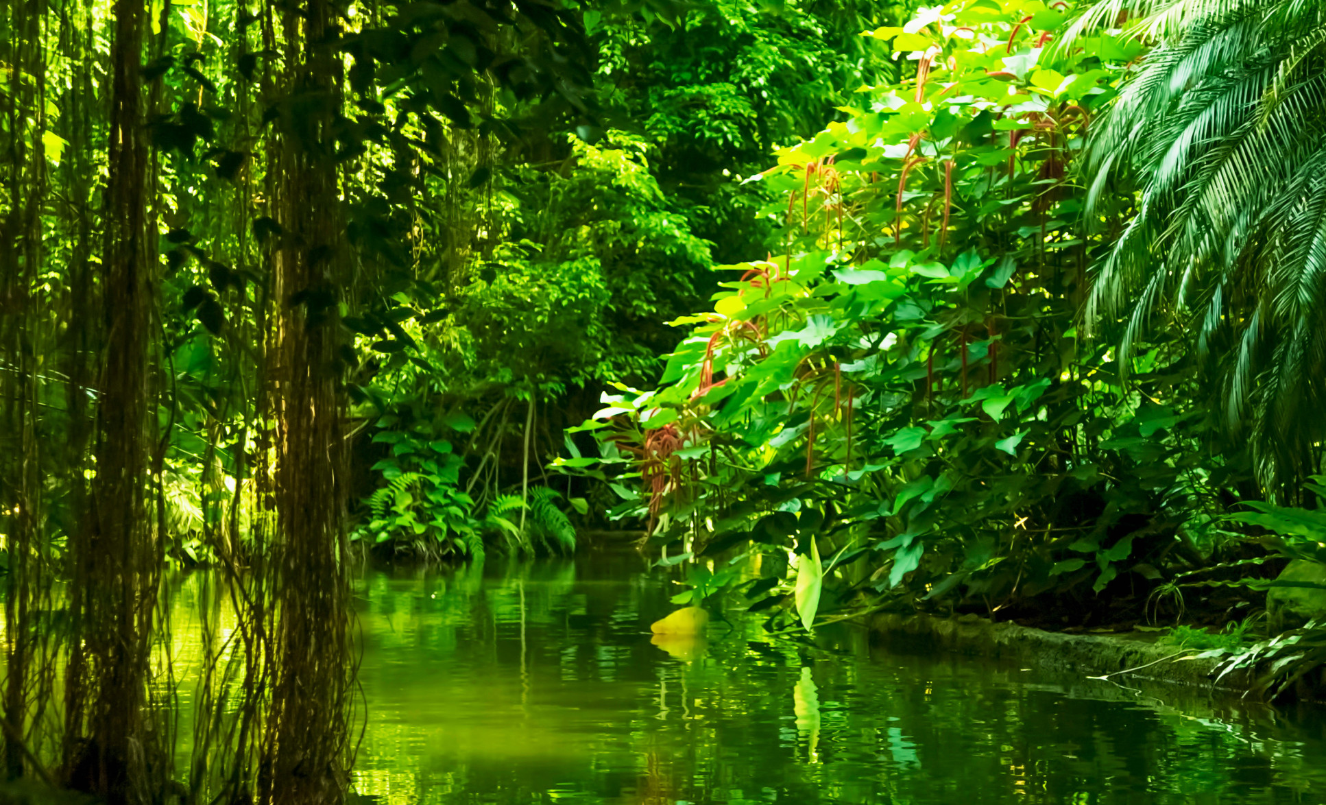 Landscape of lush tropical rainforest with river