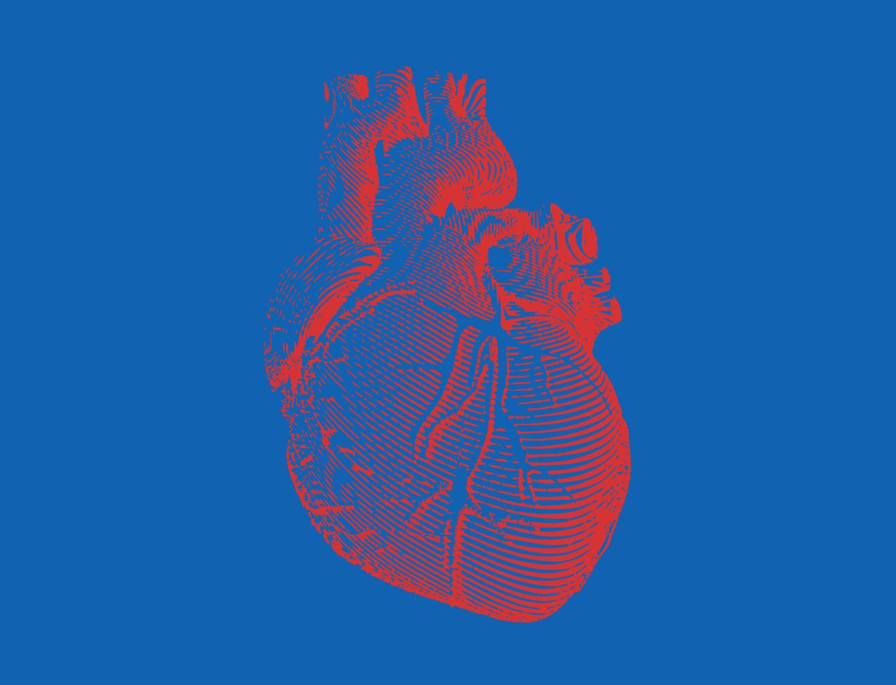 An illustration of a human heart