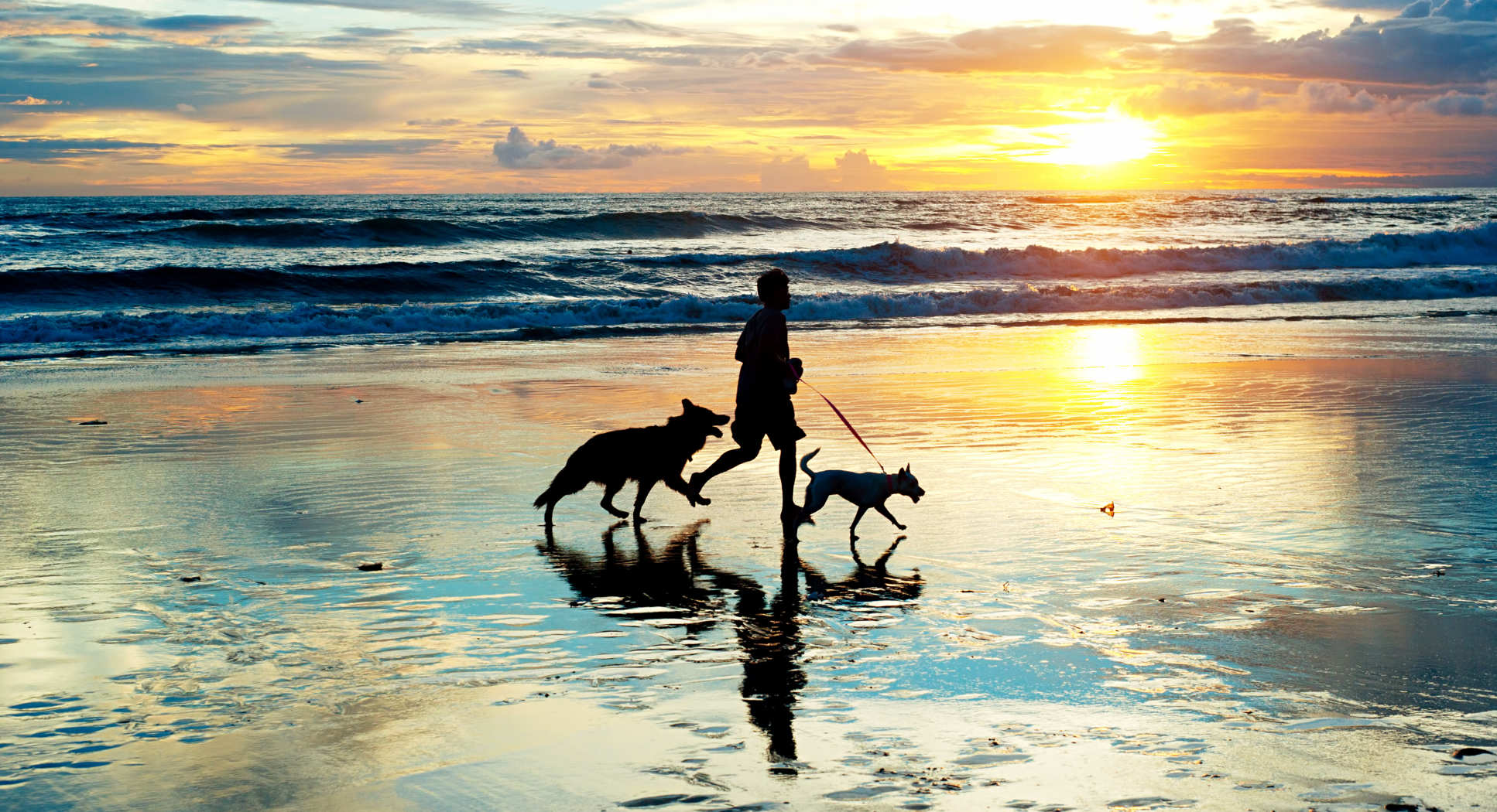 Photo of man on beach with two dogs