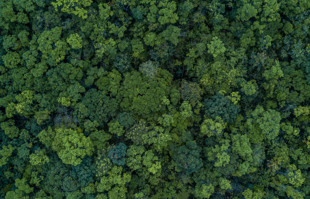 trees from above