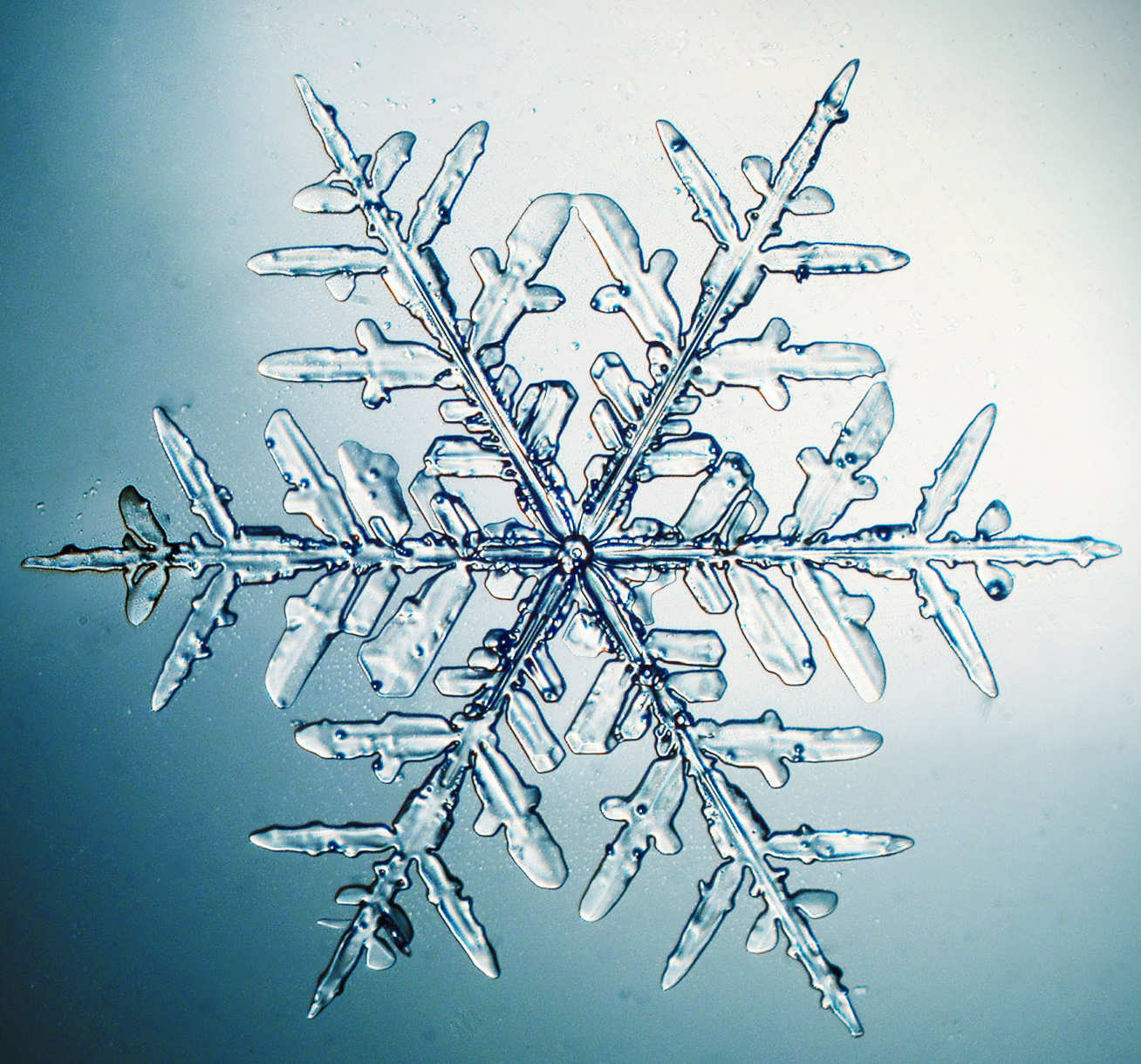 Close up photo of a snowflake