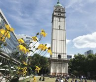 Queen's Tower at Imperial, with yellow flowers