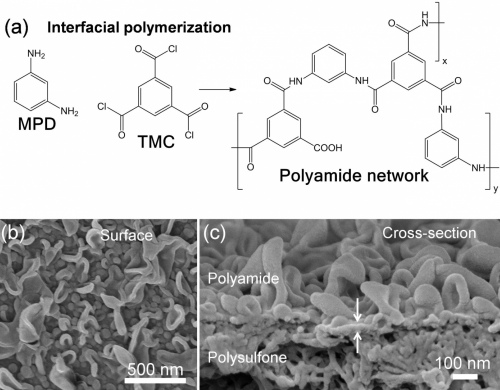 Polyamide membrane for desalination