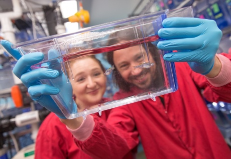 Dr Alex Willis and Dr Serge Mostowy with their zebrafish