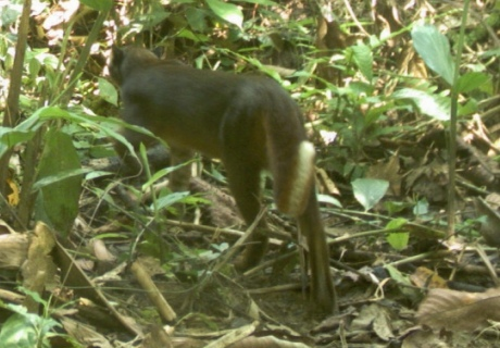 The long tail has a white streak on its underside and a small black tip