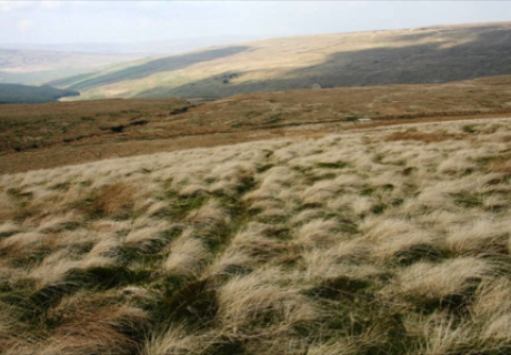 Sphagnum moss and grass above Priorsdale, Cumbria