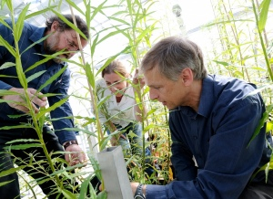 Dr Jeremy Wood (right) working on a biofuels research project