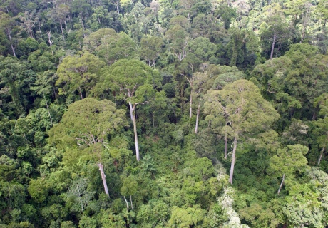 Forest canopy form above