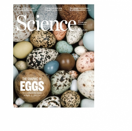 Cover of Science magazine featuring picture of eggs and blurb about the study
