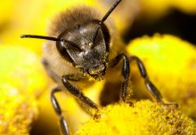 Imperial bee expert gives his take on latest research on harm from insecticides
