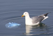 UK plastic waste in the ocean ends up in the Arctic