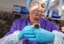 Imperial recognised for openness on animal research