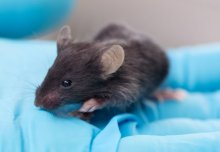 "Animal research ""3Rs"" achievements recognised"