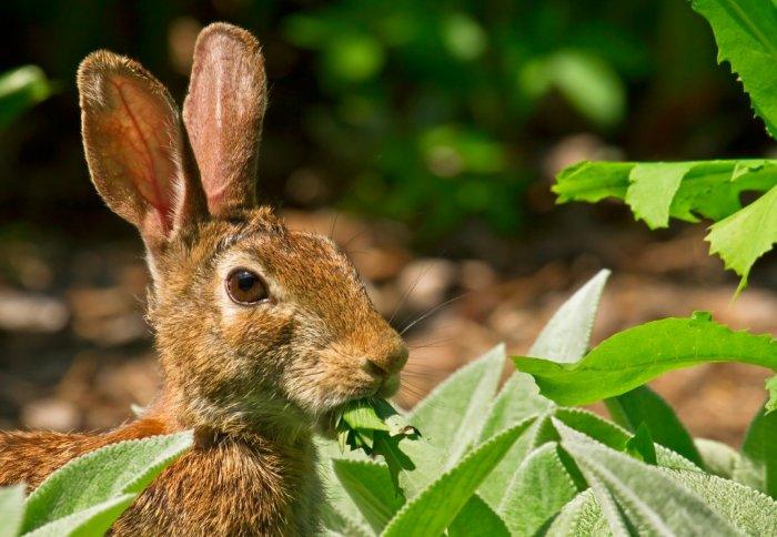 Hungry herbivores can help halt biodiversity loss ...