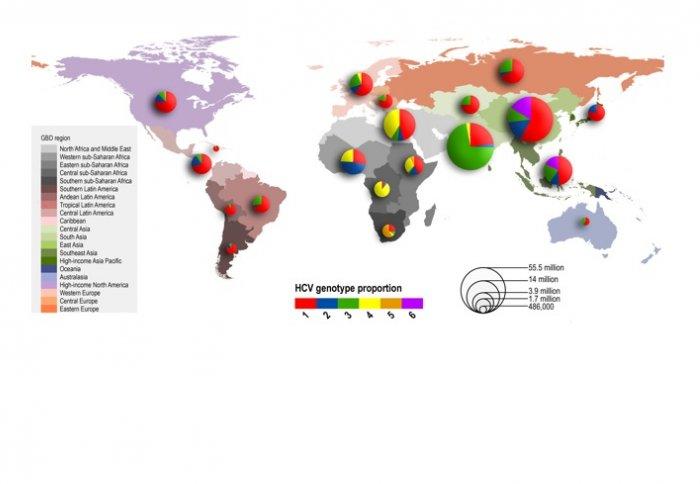 Map Of Hepatitis C Strains Should Help Eradication Efforts