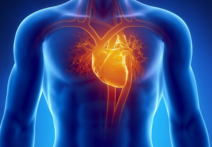 Getting into the groove helps stem cells switch into heart muscle ...