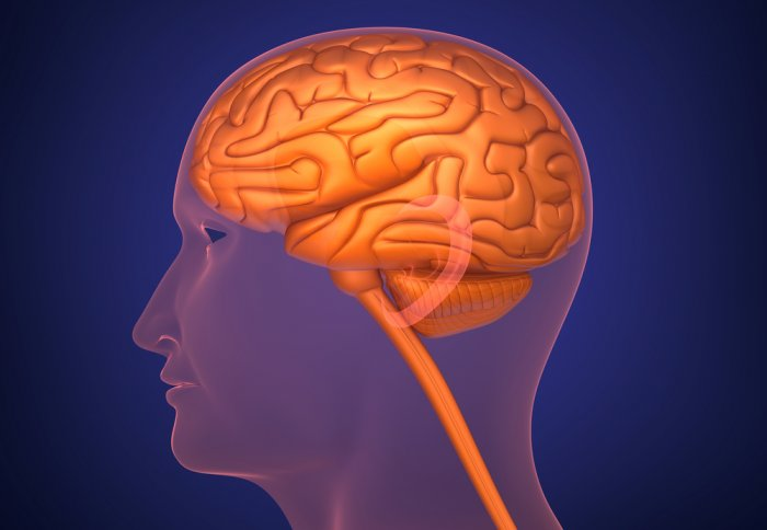 Immune cells in the brain linked to risk of schizophrenia | Imperial