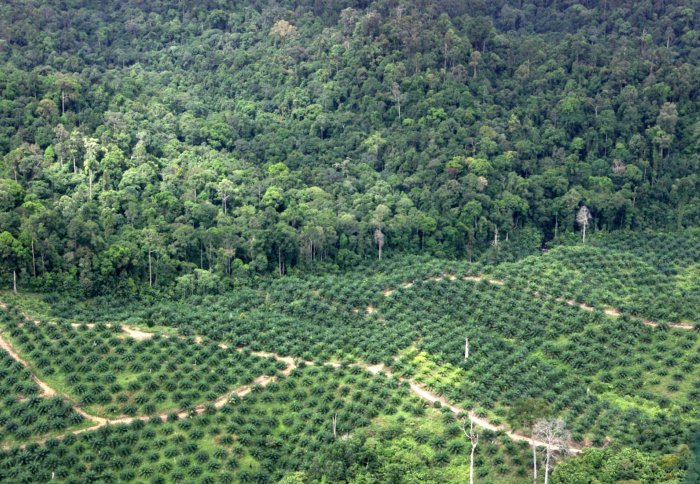 Forest bordering plantation