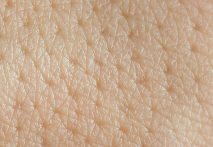 new insights into skin cells could explain why our skin doesn t leak