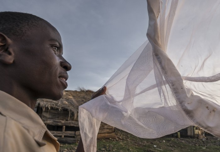 Man looking into a net holding mosquitoes