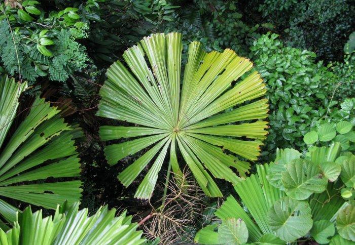 Outdoor Plants Full Sun Drought Tolerant